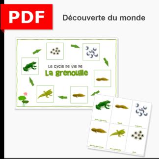 cycle de vie grenouille ief instruction en famille maternelle primaire