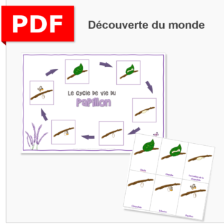 cycle de vie papillon instruction en famille ief maternelle primaire