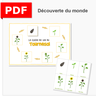 cycle de vie du tournesol ief instruction en famille maternelle primaire